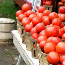 Cesta Tomate Ecológico